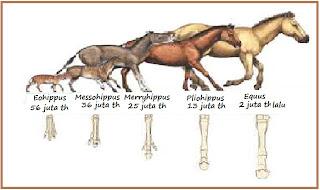 Hasil gambar untuk evolusi kuda