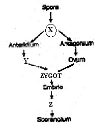 Yang berlabel X, Y dan Z adalah......