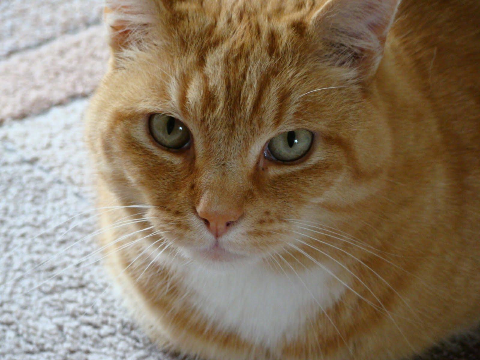 Blonde Cat Nude Photos 58