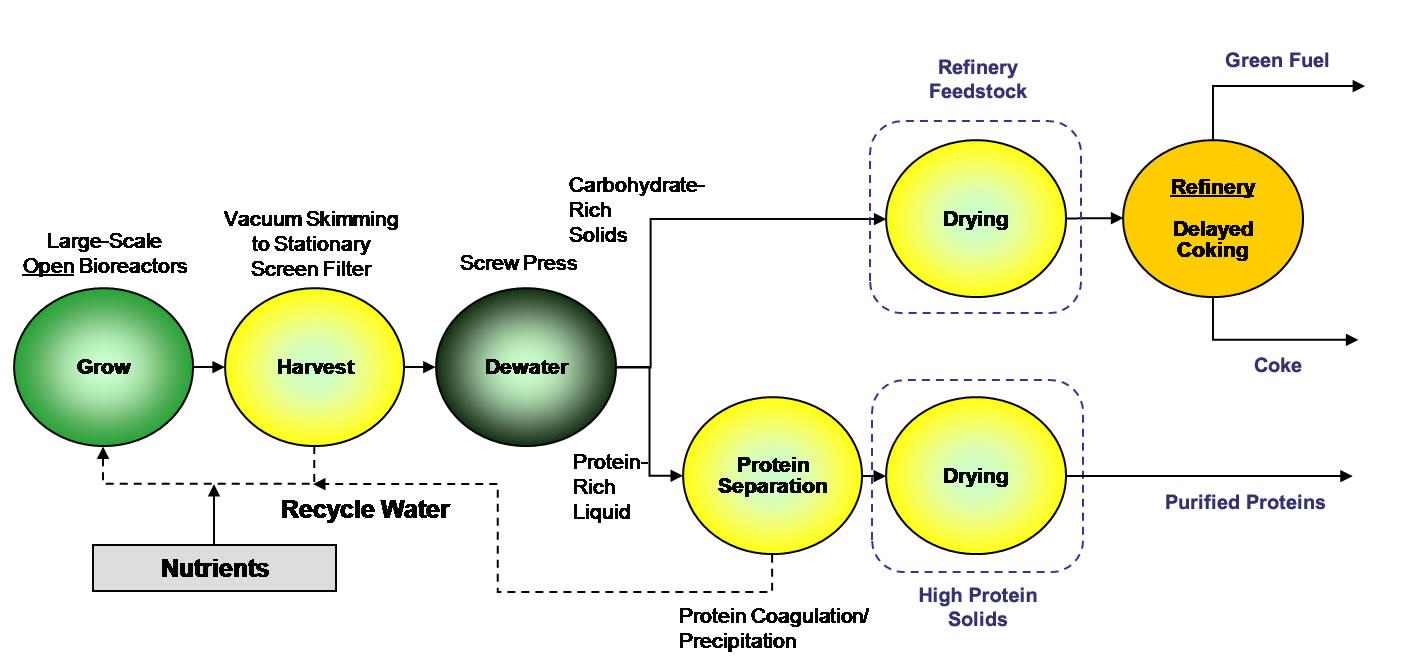 algae biofuel diagram. Black Bedroom Furniture Sets. Home Design Ideas