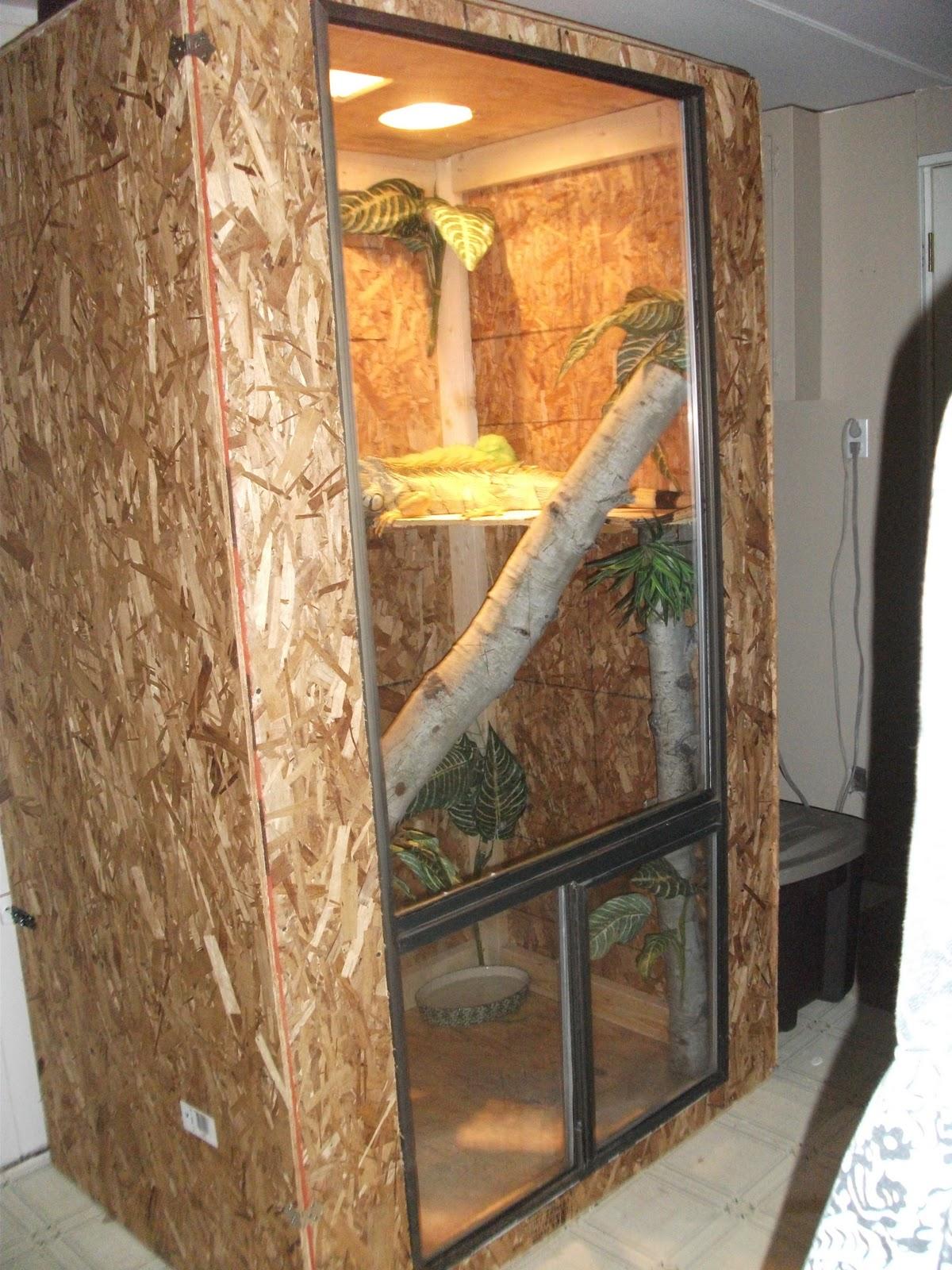 1000 Ideas About Iguana Cage On Pinterest Green Iguana