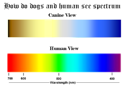 can dog see color? color vision in dogs Dogs color vision