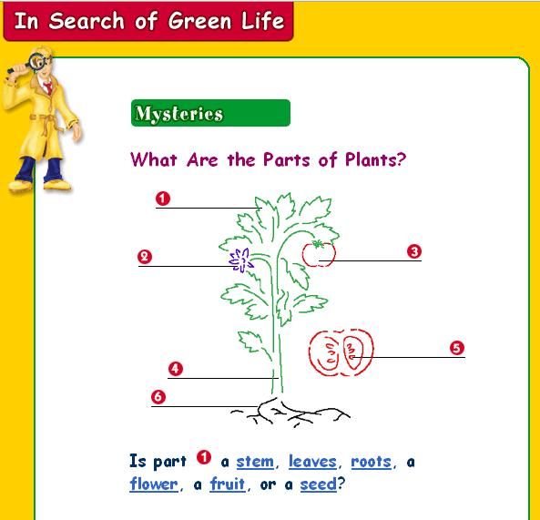 Homeschool Parent Parts Of A Plant