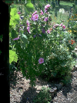 Garten Anders Hibiskus Empfehlenswert Und Man Kann Das Ganze Jahr