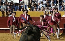 Portuguese style bull fight at Caldas da Rainha