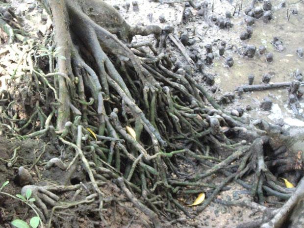 Geography Group Mangrove Natural Vegetation