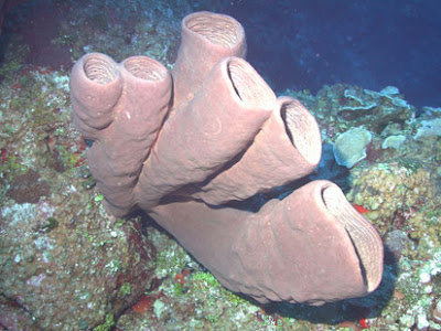 not the most attractive of sponges...