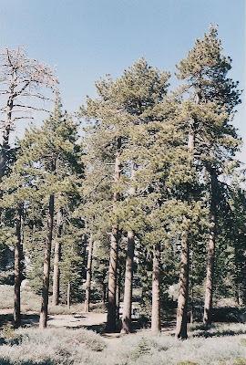 San Barnardino National Forest California
