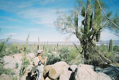 Cardon cactus Baja Mexico
