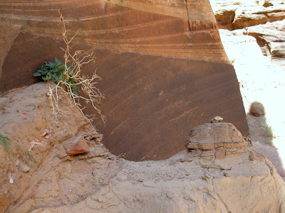 Petroglyphs and sediments at junction Wire Pass and Buckskin Gulch Utah