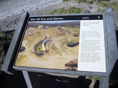 Interpretive sign for Salt Creek Pupfish Death Valley National Park California