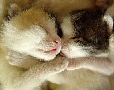 Cats Falling In Love Fun Blog