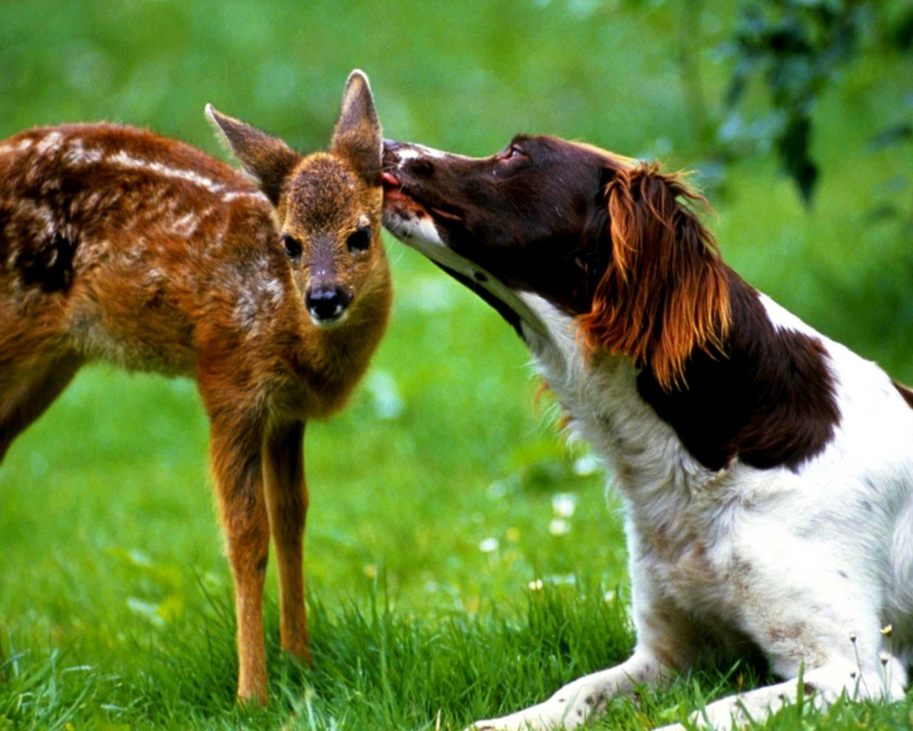 Kisses Wallpapers With Quotes Free Always 4 You 20 Amazing Animal Kisses