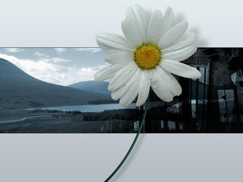 Download Besplatne Slike I Pozadine Za Desktop 3d Cvijet
