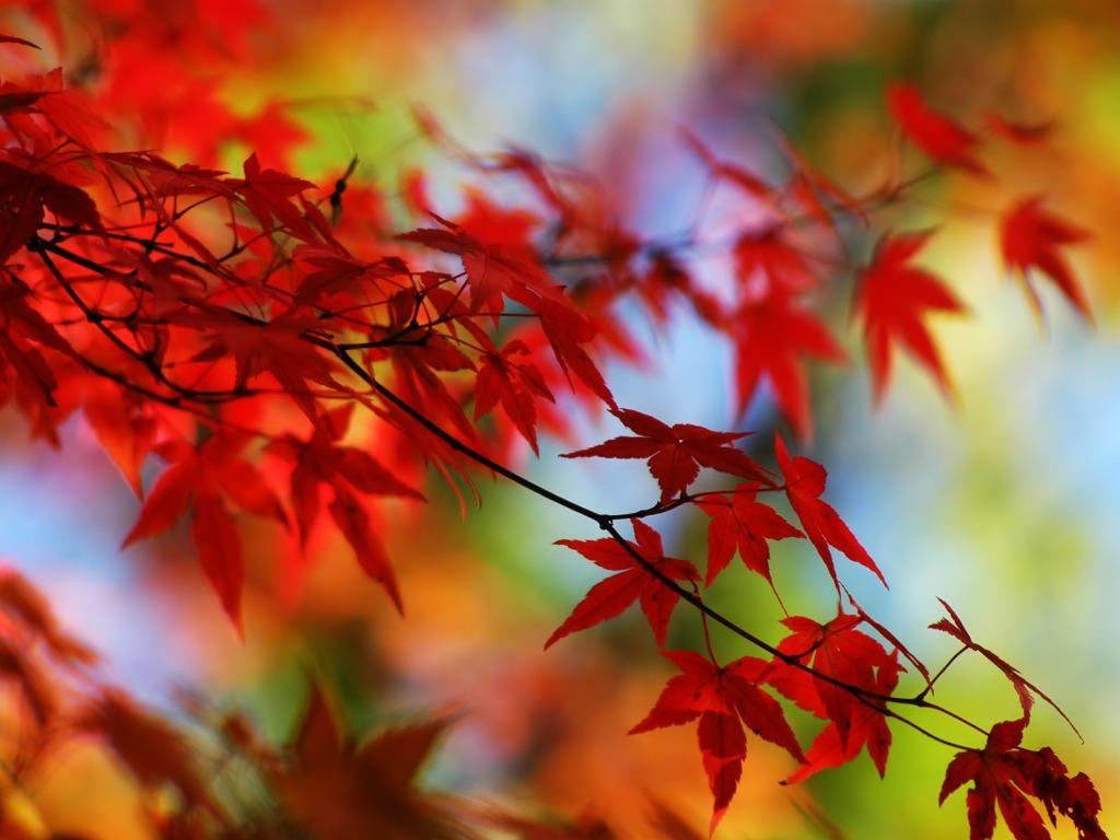 Download Besplatne Slike I Pozadine Za Desktop Lišće Jesenje