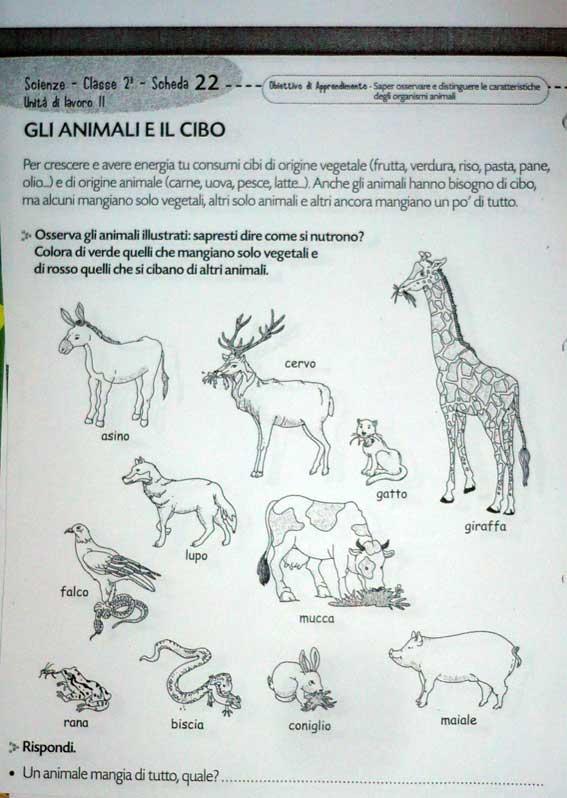 Disegni Da Colorare Di Animali Onnivori.Animali Pagina 3 Il Forum Di Maestra Sabry