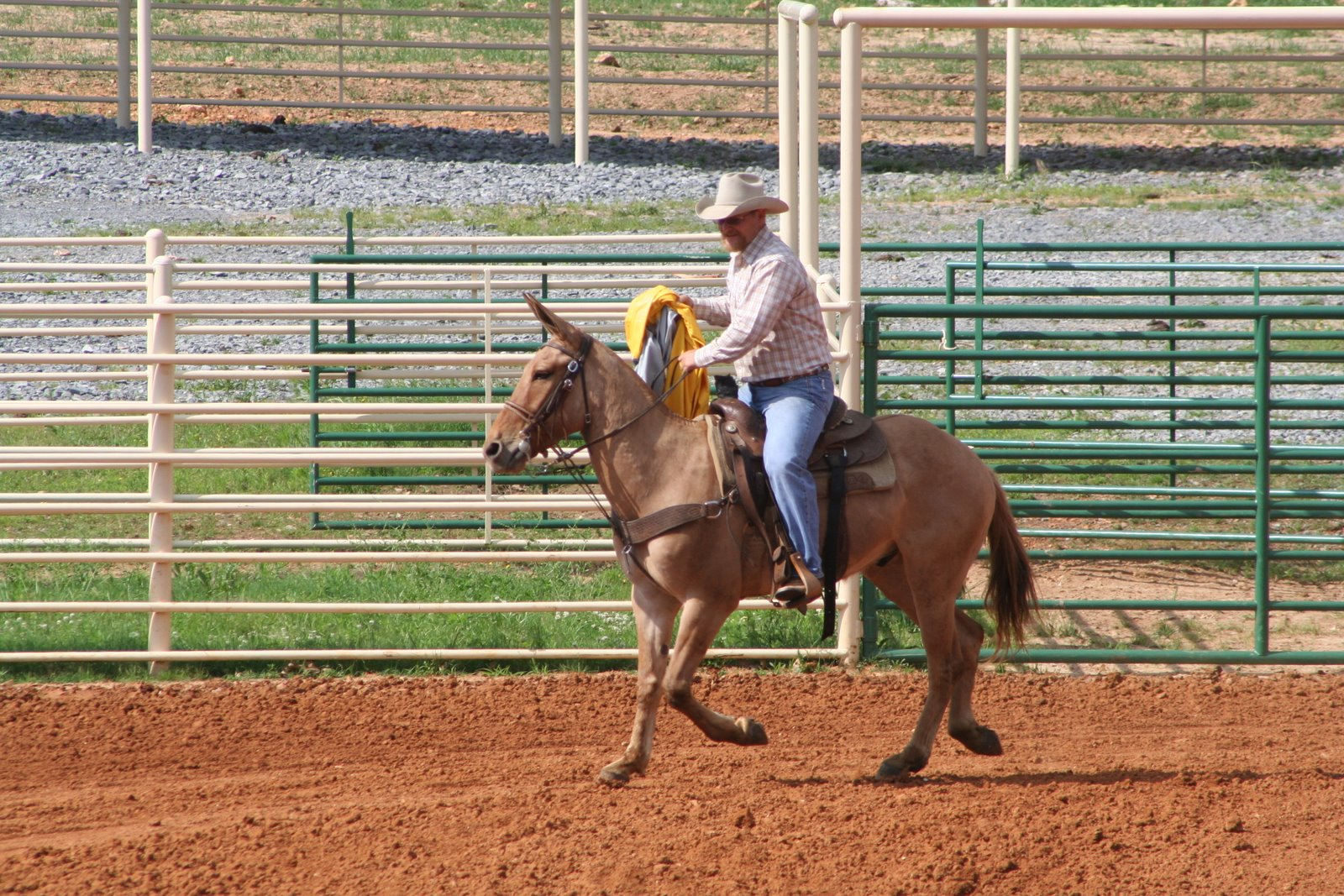 PairADice Mules: Obstacle Course