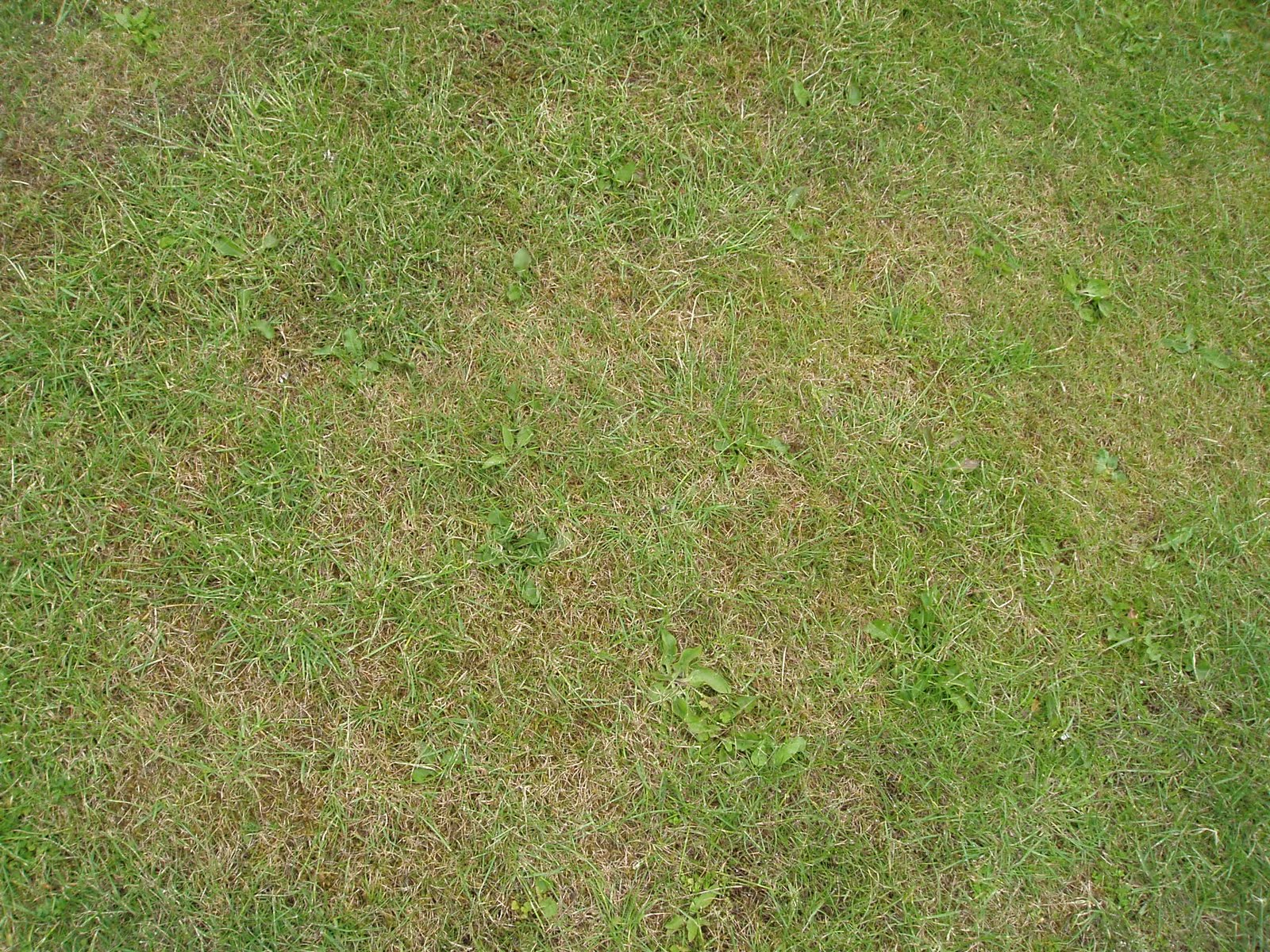 Gallimaufry & Chips: Foolproof Lawn Care