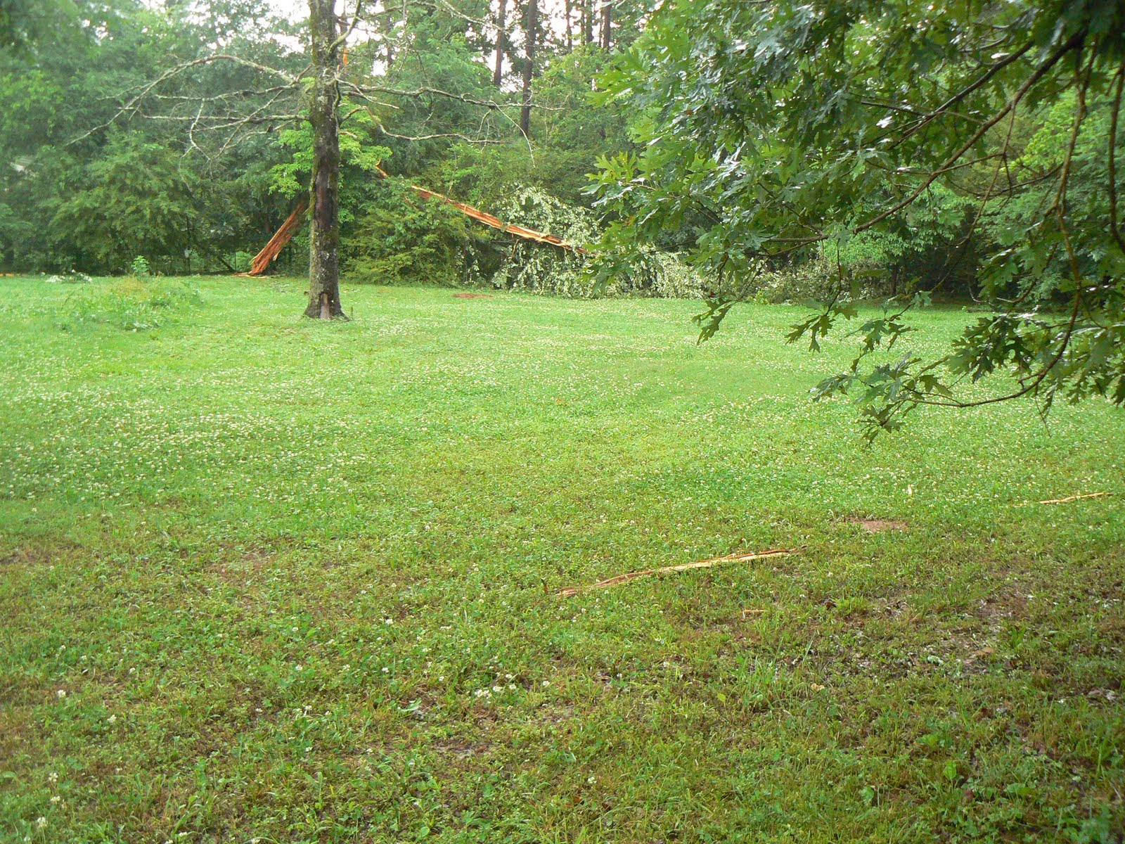 Home Sweet PROJECT Home: Lightning Strikes Tree in our ...