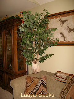 siamese cat in livingroom