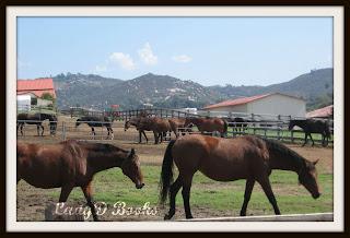 Many Horses: LadyD Books