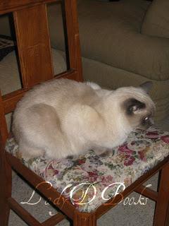 Siamese Cat: LadyD Books