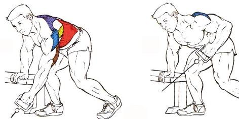 remo polea baja musculos
