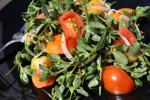 Purslane, Heirloom Tomato, & Onion Salad