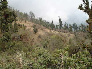 Essay on forests in nepal