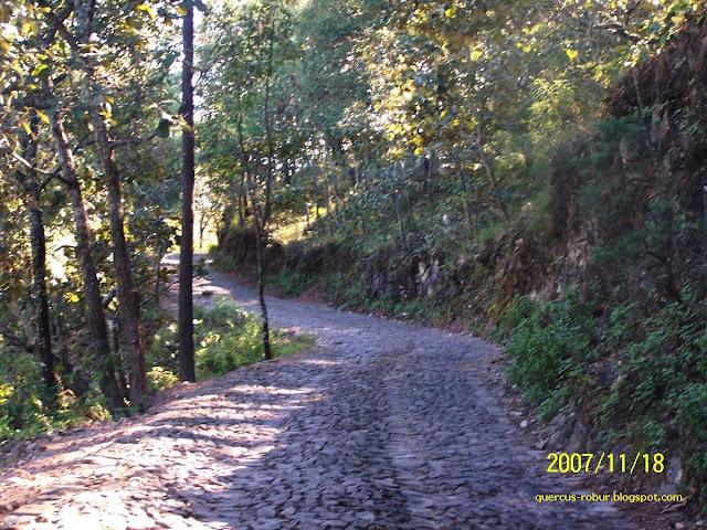 Camino a la laguna de Juanacatlán