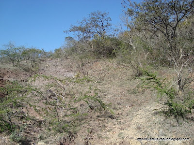 Arbustos espinozos en el Cerro la Mesa