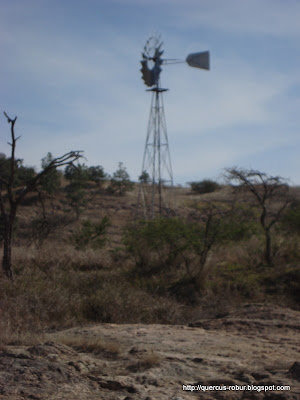 Molino para bombear agua para el ganado