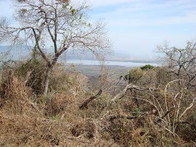 Bosque subcaducifolio en Cerro Grande de Ameca