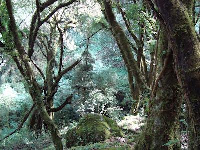 Cañada Cerro Viejo