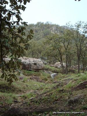 bosque de encino