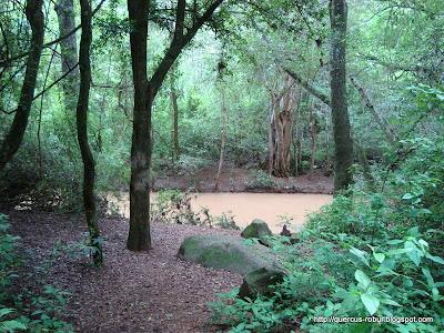 Vista del arroyo del Salto del Nogal