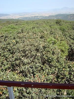 Pinar de la Venta vista desde Torre 2 (BLP)