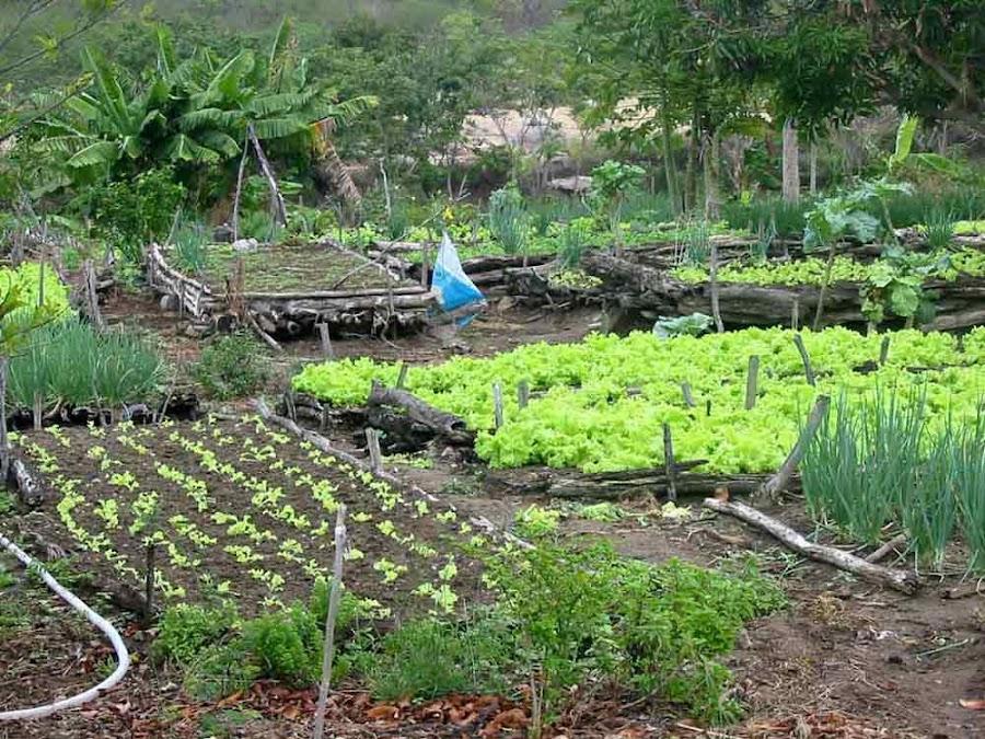 Resultado de imagen para sistema agroecologico