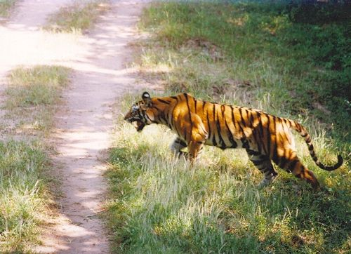Save Tigers: Tiger Reserves in India