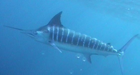La Manta Sportfishing: Photo Page