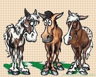 En total, cada cavall haurà recorregut 6 kilòmetres