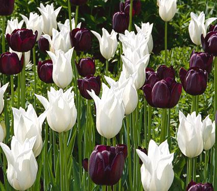 Black and white in the garden mightylinksfo