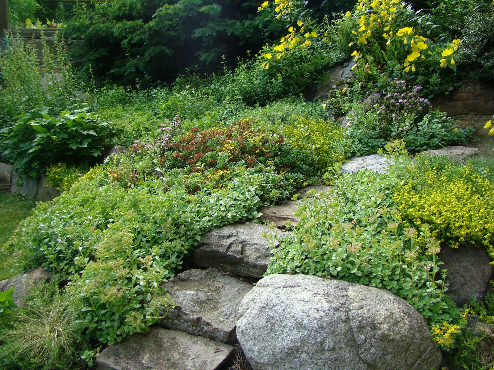 Make A Rock Garden!