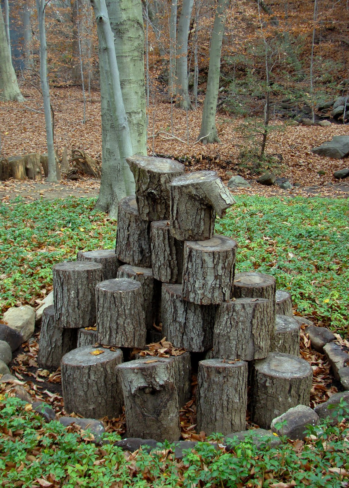 Tree stump poetry for Tree trunk slice ideas
