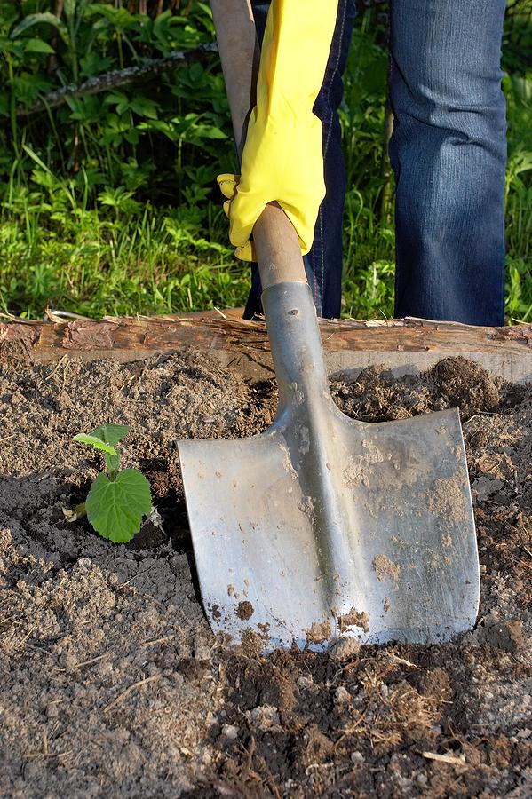 Gardening : Writing