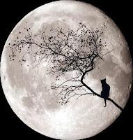 Gato luna