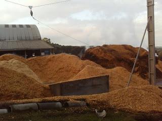 Brazil Biomass: BIOMASS WOOD CHIPS FUEL EUCALYPTUS