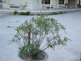 plants in Thessaloniki