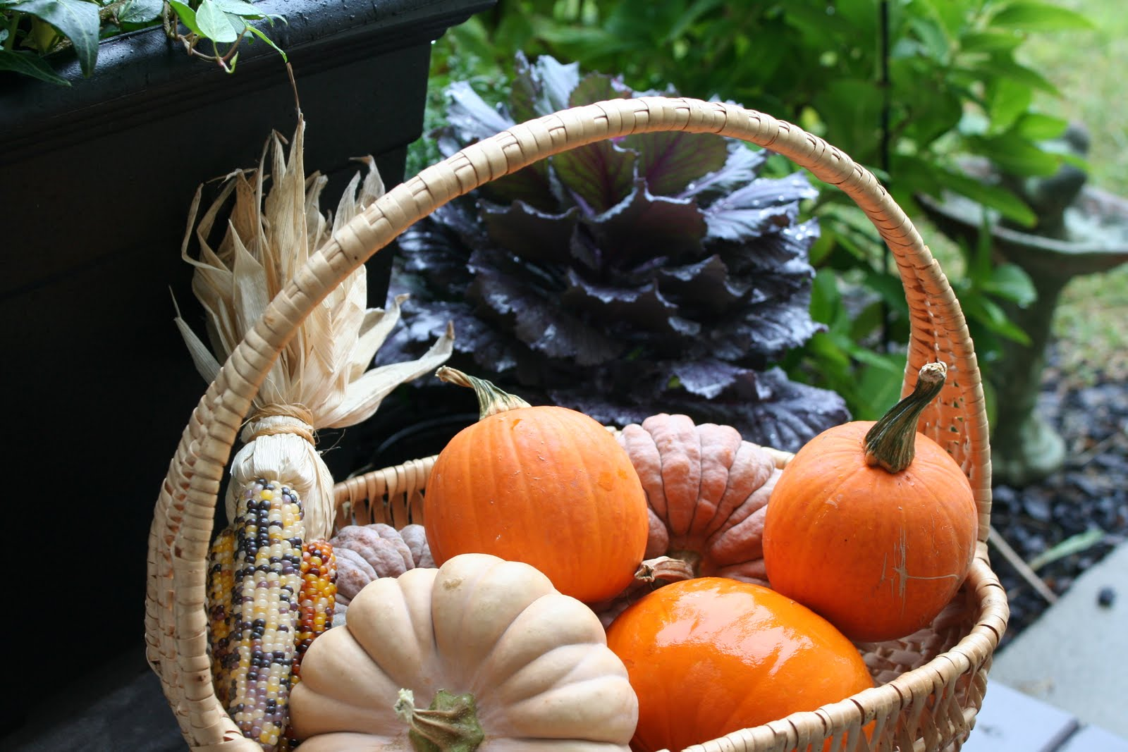 Charming The Birds From The Trees Learning Basket Pumpkins
