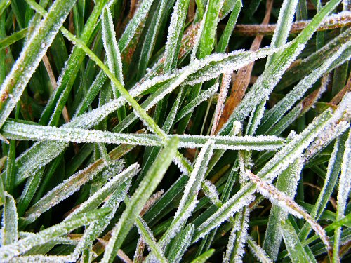 Frost on Grass fall autumn